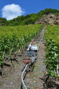 Weingut Scholtes Steillagenanbau