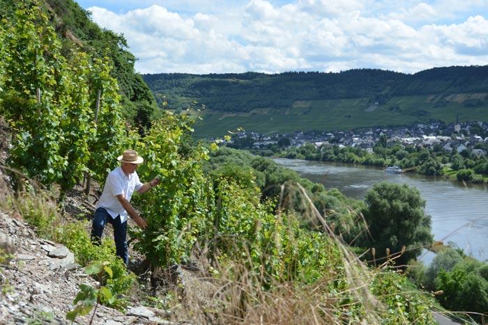 Weingut Scholtes Wie wir arbeiten Steillagenanbau